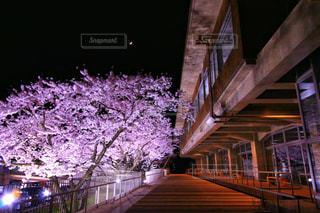自然,風景,建物,桜,夜,ピンク,綺麗,幻想的,夜桜,景色,ライト,月,秋田県,能代市,2018年4月,能代市役所
