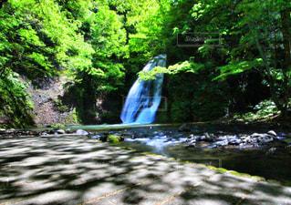 森の中の滝の写真・画像素材[1197899]
