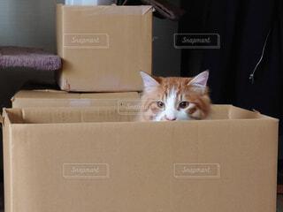 箱から覗く猫の写真・画像素材[4163580]