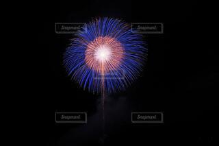 能代花火の写真・画像素材[4659955]