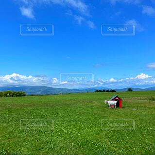 自然,風景,緑,草原,牧場,景色