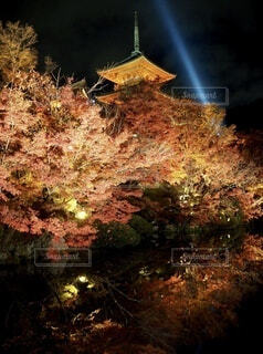 自然,風景,秋,夜,紅葉,屋外,池,ライト,反射,ライトアップ,紅葉狩り