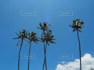 自然,風景,空,屋外,雲,青い空,樹木,ヤシの木,草木,パーム