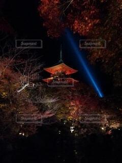 空,秋,夜,夜景,屋外,暗い,樹木,ライトアップ,明るい,景観