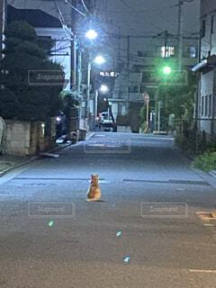 犬,猫,風景,夜,動物,屋外,散歩,道路,道,路地,歩道,地面,通り,まったり,寂しい,静けさ,しんみり,街路灯