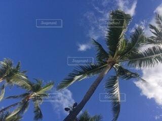 自然,空,屋外,雲,島,青い空,樹木,ヤシの木,ココナッツ,草木