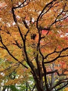 公園,秋,屋外,樹木,草木
