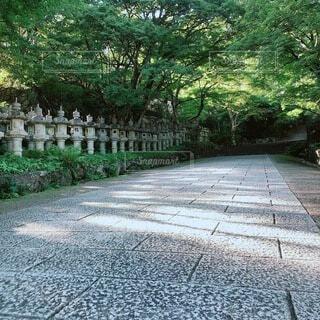 樹木,草木,勝尾寺