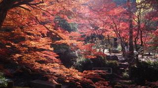 自然,空,秋,動物,紅葉,鳥,木,山,景色,オレンジ,樹木,谷,落葉,草木,カエデ,峡谷,フォトジェニック
