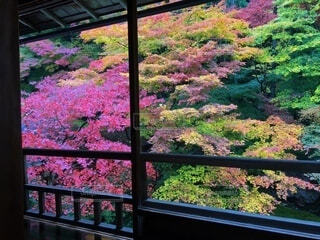 秋,紅葉,カラフル,草,美しい,庭園,草木