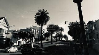 空,アメリカ,観光,ヤシの木,通り,カリフォルニア,パーム,黒と白