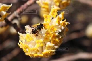 花,動物,黄色,蜂,昆虫,ミツバチ,草木