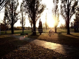 空,公園,自転車,屋外,大阪,太陽,夕焼け,樹木,日本,地面,枚方