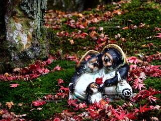 秋,紅葉,屋外,草,たぬき,狸,焼き物