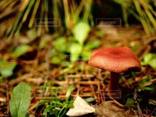 秋,屋外,草,キノコ,食品,草木,菌,食用キノコ,ハラタケ科