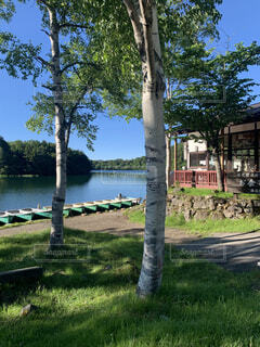 空,公園,屋外,湖,ボート,川,水面,草,樹木,草木