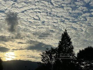 自然,屋外,雲,樹木