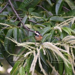 動物,鳥,樹木,草木
