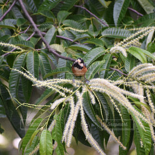 動物,鳥,樹木,昆虫,草木