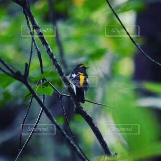 動物,鳥,屋外,黒,樹木,昆虫,ワイヤー,腰掛け,支店