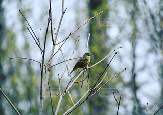動物,鳥,屋外,樹木,腰掛け,支店