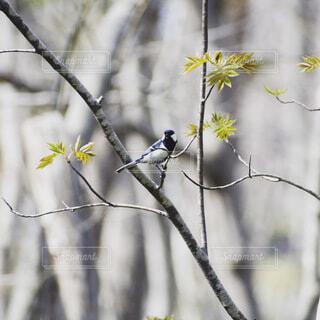 花,動物,鳥,屋外,樹木,座る,腰掛け,支店