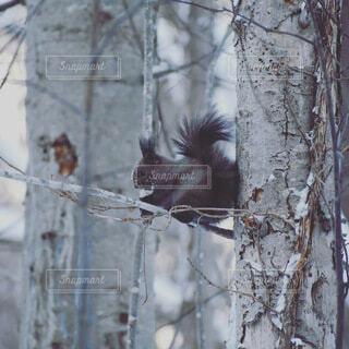 冬,動物,鳥,雪,屋外,樹木,リス,腰掛け