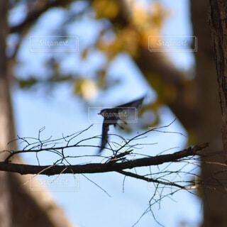 空,動物,鳥,屋外,樹木