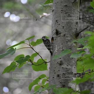 動物,鳥,屋外,樹木