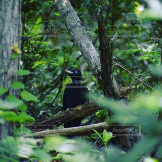 動物,森林,木,屋外,黒,樹木,座る,腰掛け,支店