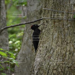 動物,鳥,木,屋外,樹木,キツツキ,カラス,腰掛け