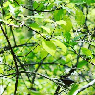 動物,鳥,屋外,葉,樹木