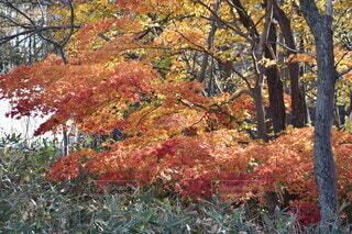 秋,屋外,草,樹木,落葉,草木