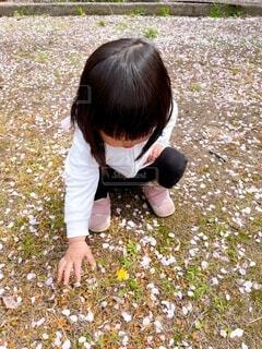 子ども,風景,桜,屋外,草,人物,人,たんぽぽ,桜の花びら