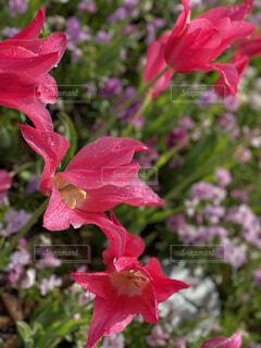 花,屋外,ピンク,赤,草木,ブルーム,フローラ