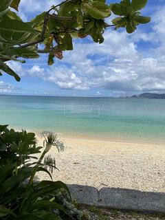 自然,風景,海,空,屋外,ビーチ,雲,島,砂浜,水面,海岸,沖縄,樹木,眺め