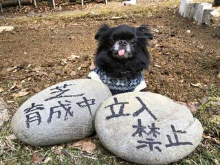 犬,動物,屋外,白,黒,景色,草,地面,手書き