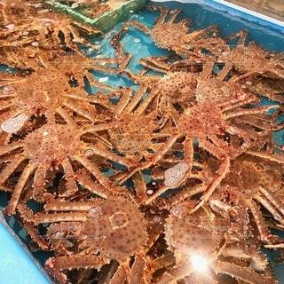 食べ物,食事,葉,フード,カニ,蟹,シーフード,生,草木,飲食,海洋無脊椎動物