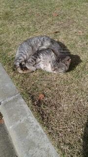 猫,動物,屋外,草,子猫