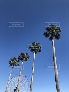 空,屋外,ヤシの木,パーム,ヤシ目