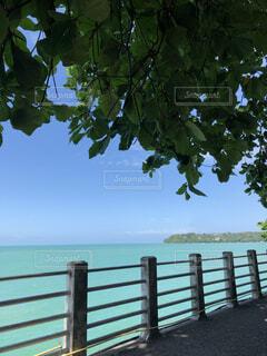 自然,風景,空,屋外,湖,ビーチ,水面,樹木