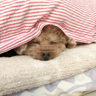 犬,動物,布,毛布,子犬,ストライプ,ベッド