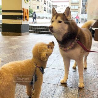 犬,動物,立つ,地面
