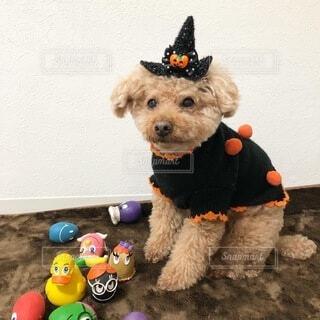 犬,動物,オレンジ,ハロウィン,グッズ