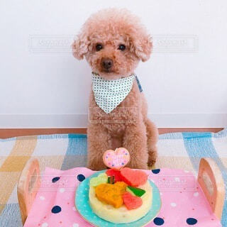 犬,動物,屋内,テディベア,誕生日ケーキ,グッズ,クマ