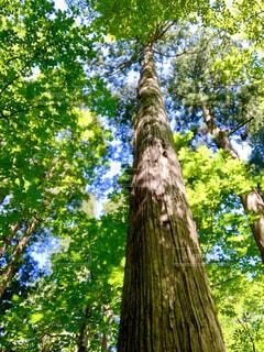 自然,アウトドア,森林,屋外,山,樹木,キャンプ,森林浴,地球,守る,エネルギー,密,持続可能,コロナ禍