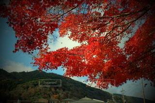 風景,空,秋,屋外,葉,樹木,落葉,草木