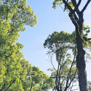 空,屋外,緑,青空,青,散歩,樹木,さわやか,草木