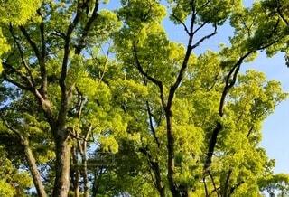 自然,空,公園,秋,屋外,緑,散歩,葉,樹木,草木