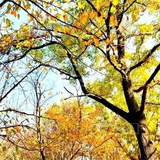空,公園,秋,屋外,緑,散歩,黄色,オレンジ,樹木,落葉,草木,秋の旅行